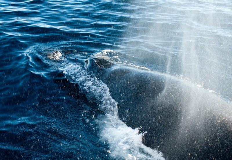 oceanwide expeditions-norway