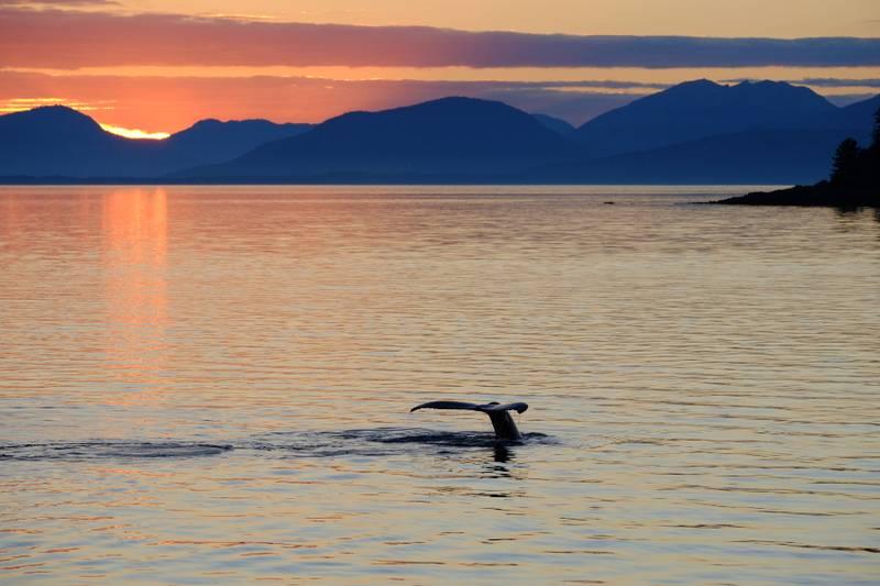 Alaska Dream Cruises