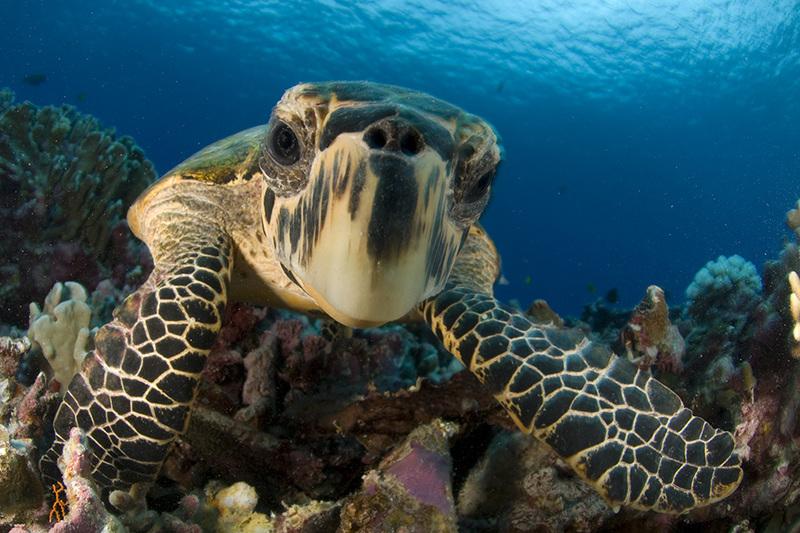 Aqua Expedition - Raja Ampat