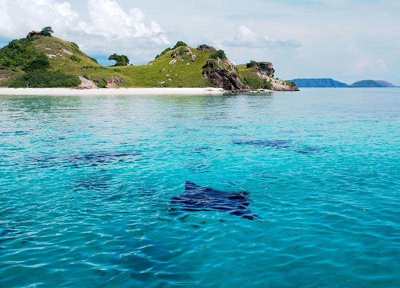 Aqua Expeditions - Komodo