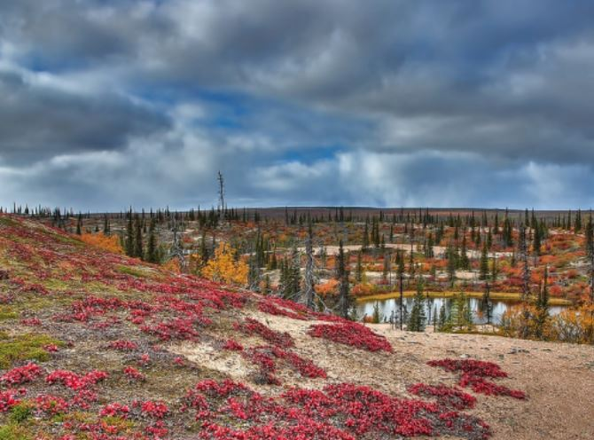 arctic haven lodge fall