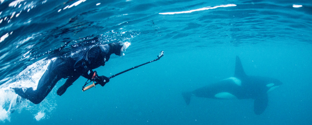 snorkel with orca in norway