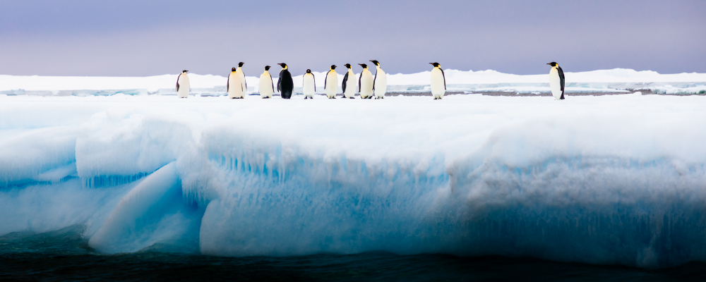 ross sea expedition cruise photography