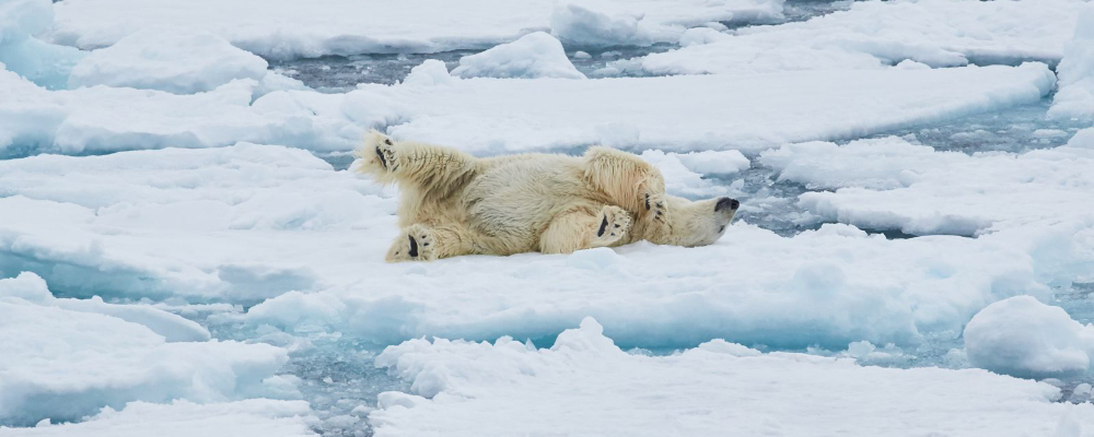 Early Summer Arctic | iExpedition