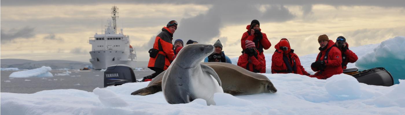 Akademik Ioffe whales in Antarctica cruise