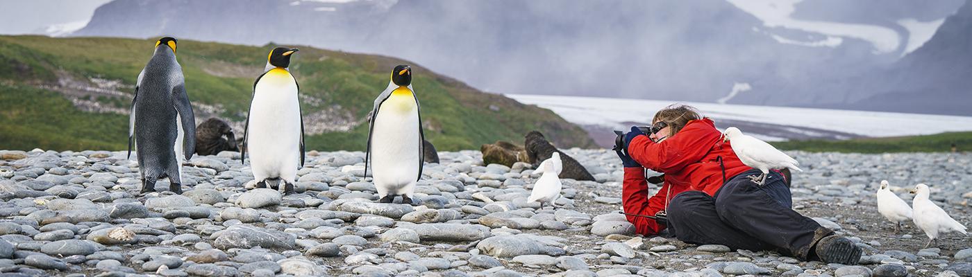 plancius south georgia and antarctica cruise