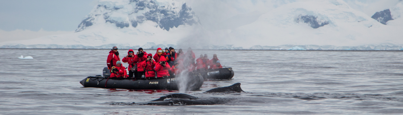 sea spirit new year antarctica cruise