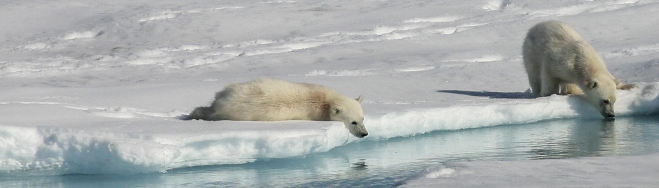 Arctic cruise spitsbergen greenland iceland