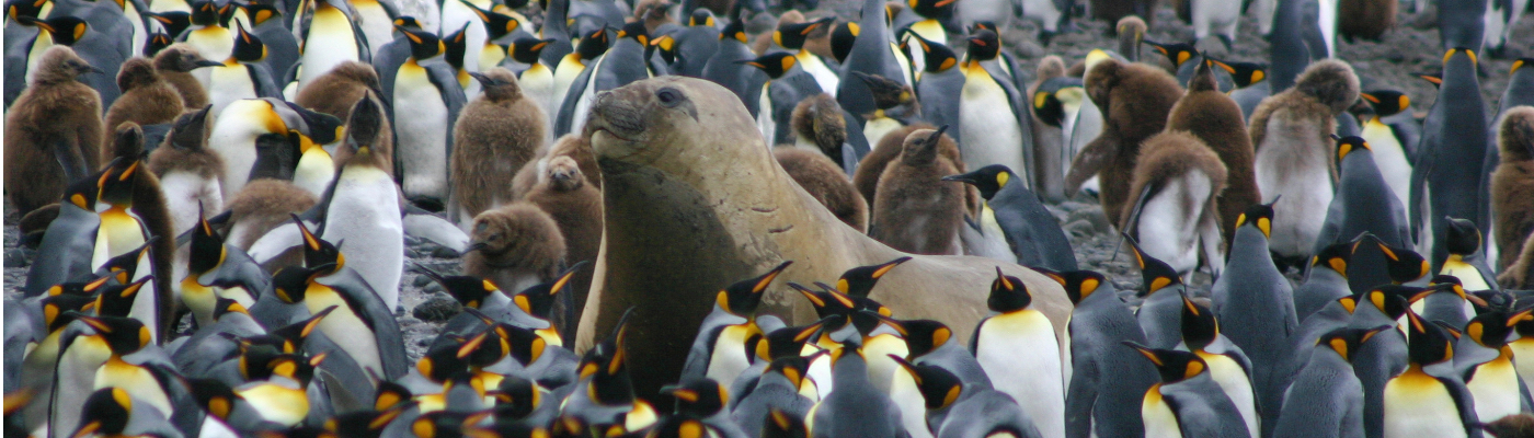sub antarctic islands macquarie island ponant