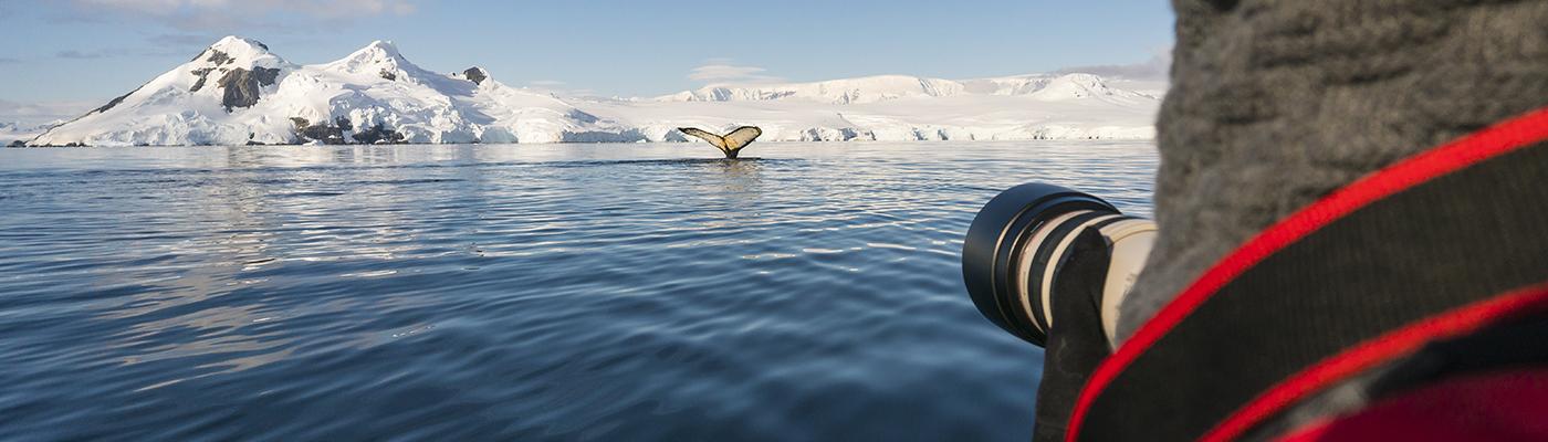 hondius whale watching antarctica cruise