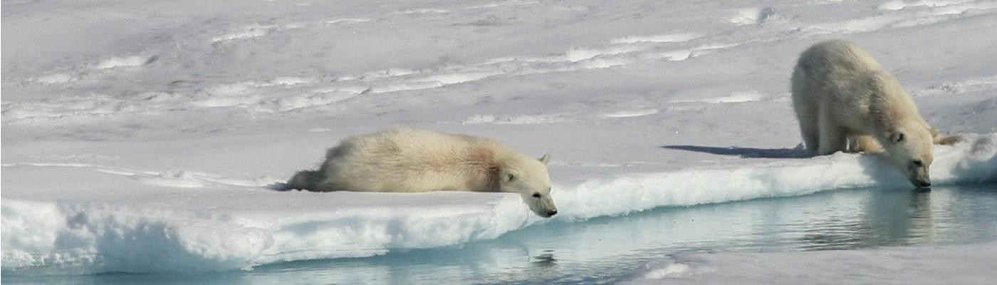 eclipse norway cruise polar bear cruise