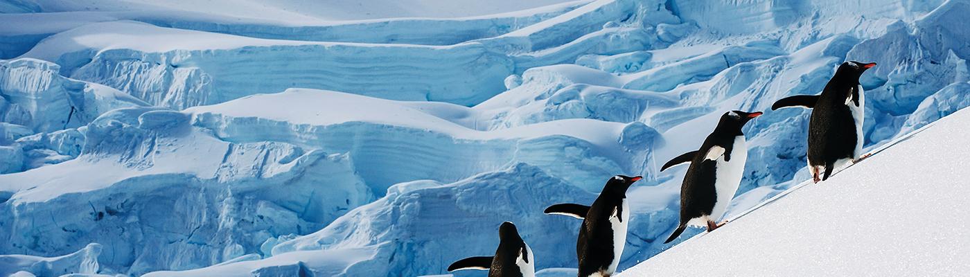 silver cloud christmas antarctic cruise