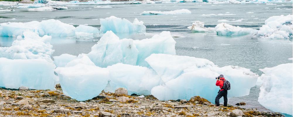 glacier bay cruise snow goose