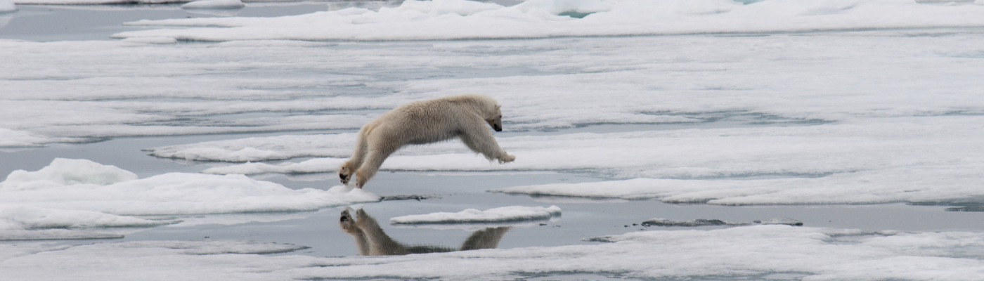 greg mortimer spitsbergen polar bear cruise