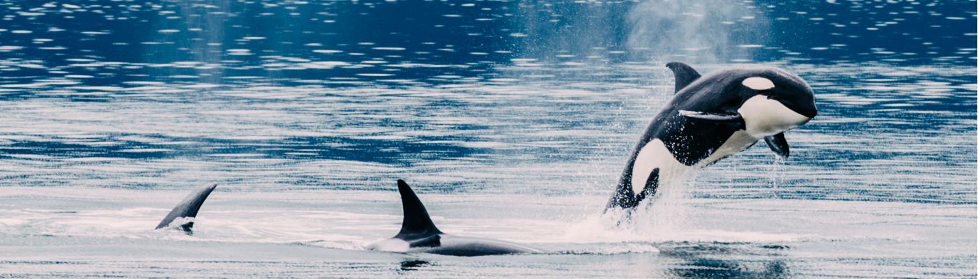 pacific provider alaska adventure cruise