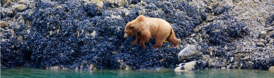 admiralty dream glacier bay alaska cruise