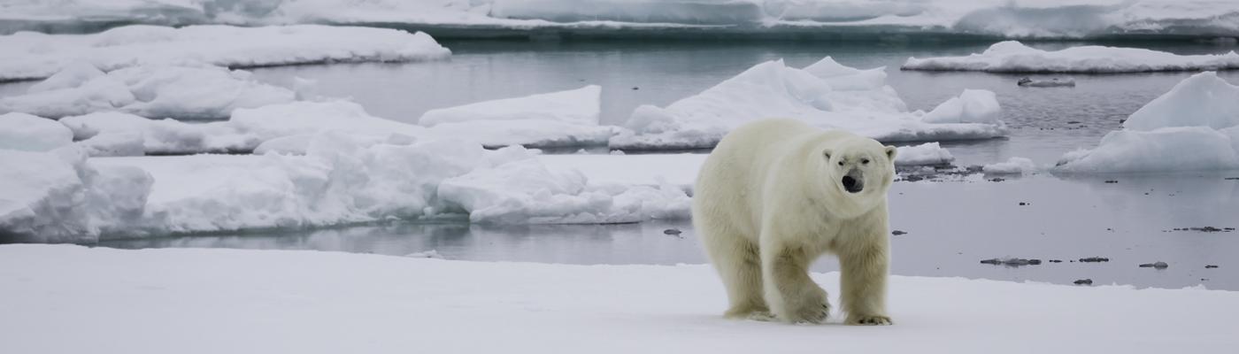 akademik ioffe baffin island canada high arctic cruise