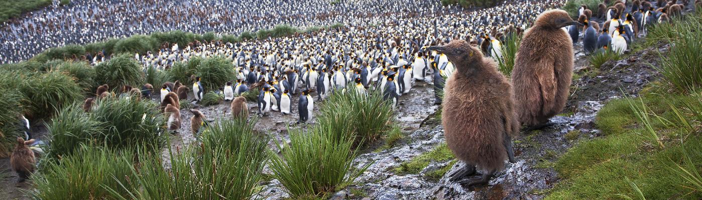 Akademik Ioffe falkland islands south georgia and antarctica expedition cruise