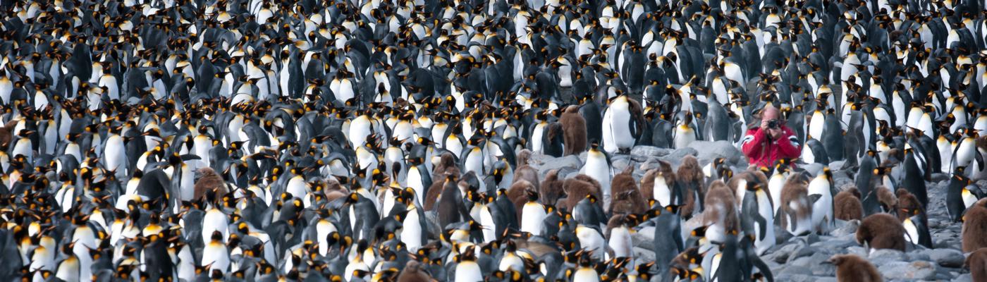 g expedition antarctic peninsula cruise