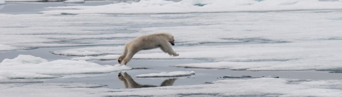 greg mortimer spitsbergen polar bear cruise