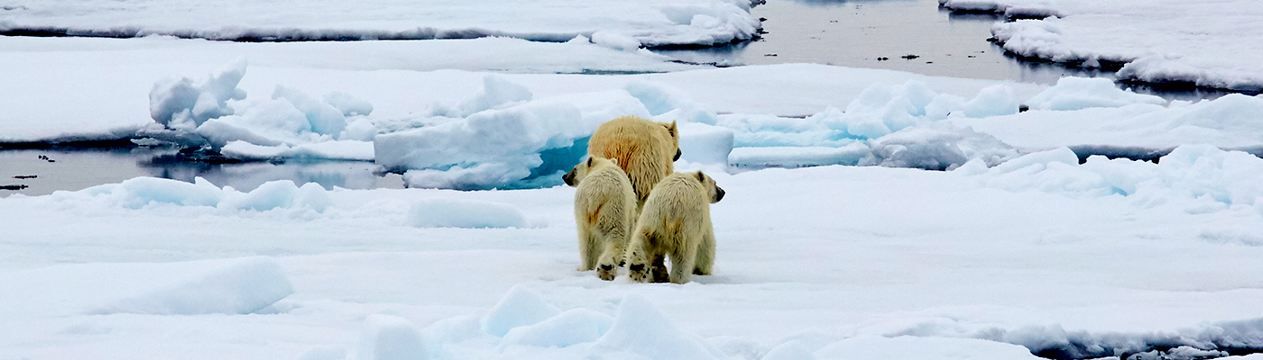 hondius polar bear cruise