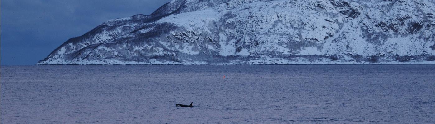 rembrandt van rijn north norway aurora borealis and whales voyage