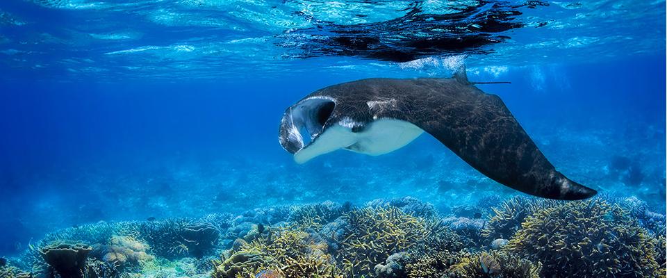aqua blue raja ampat expedition
