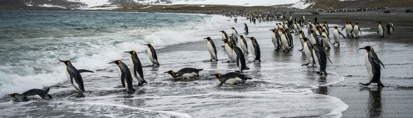 sea spirit south georgia and antarctica cruise
