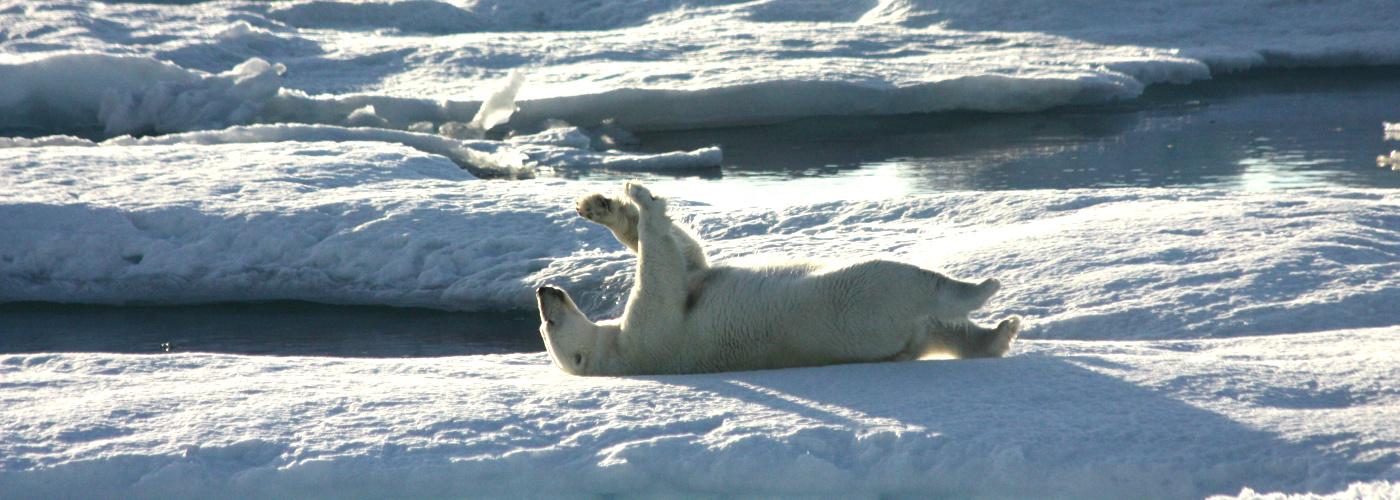 crystal endeavor polar bear cruise luxury expedition