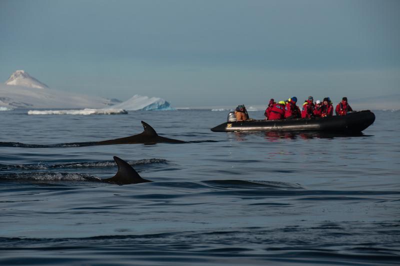 Adeline heymann antarctica2 day45 zodiac whales 0712