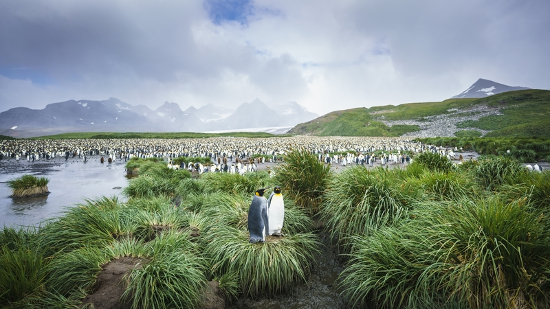Falklands  south georgia  ant peninsula %c2%a9 fotografie dietmar denger oceanwide expeditions83.jpg dietmar denger oceanwide expediti