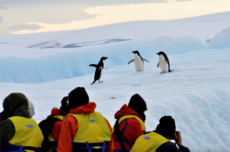 %c2%a9tony gordon antarctic peninsula adelie penguins courtesy of aurora expeditions