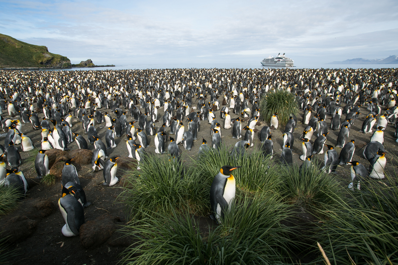 L'Austral south georgia and antarctica cruise