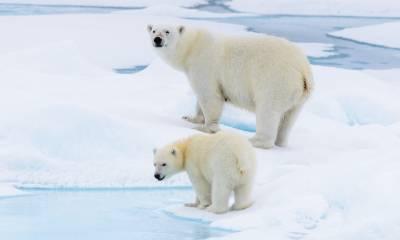 polar pioneer polar bear cruise svalbard