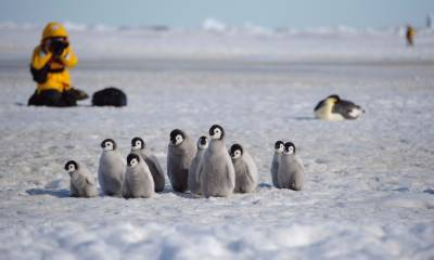 snow hill island antarctica emperor penguins