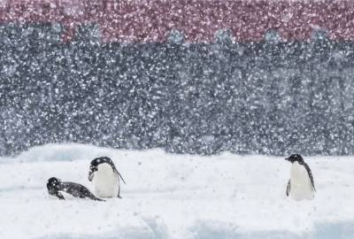 fritdjof nansen christmas antarctica cruise