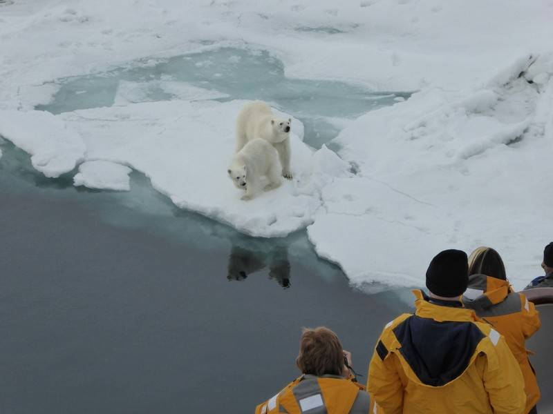 ocean adventurer spitsbergen polar bear cruise