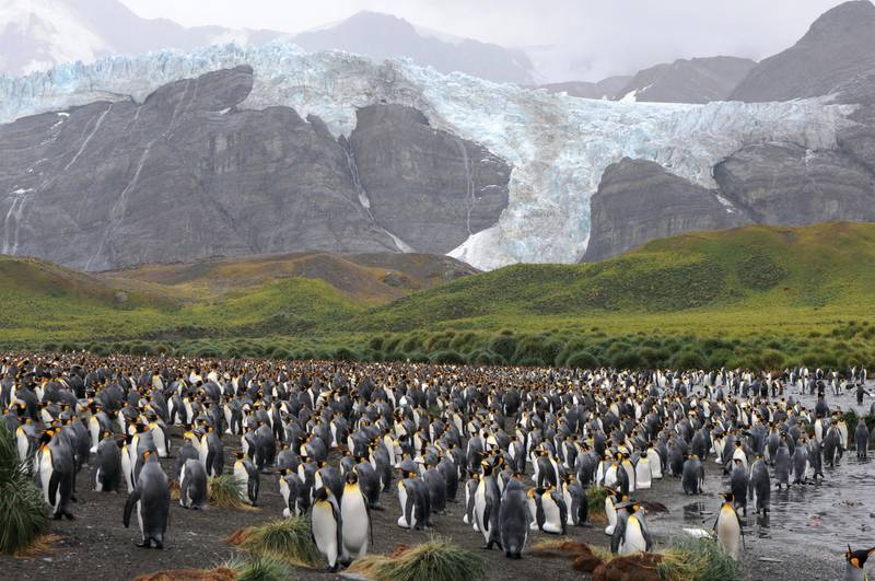 silver explorer luxury south georgia and antarctic cruise