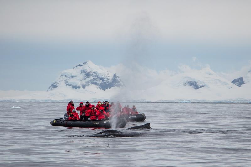 sea spirit christmas antarctica cruise