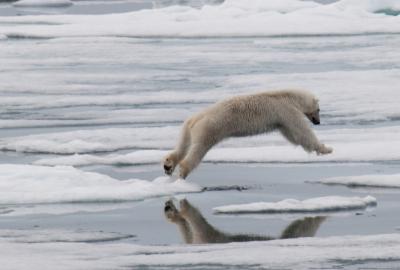 Aex arctic