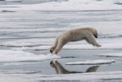 high arctic adventure greg mortimer