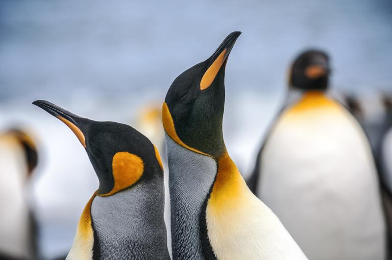 Antarctica penguins close up gary arndt 2012 3416 lg rgb