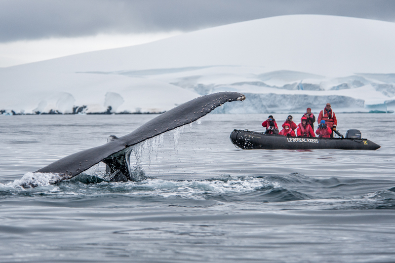 le boreal antarctic peninsula luxury cruise