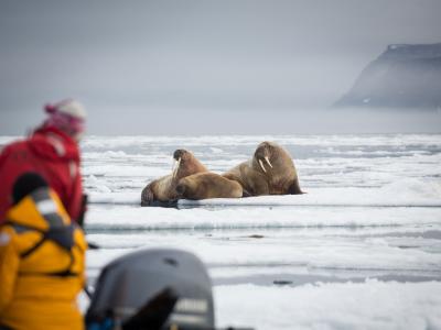 Walrus cruise waldenoya svalbard acaciajohnson 4