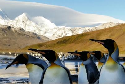 world Explorer south georgia and antarctica cruise