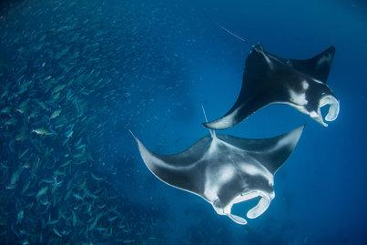 palau scuba diving expedition cruise