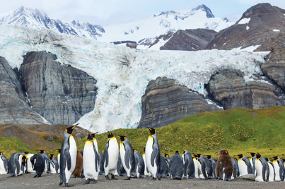 national geographic explorer luxury south georgia cruise