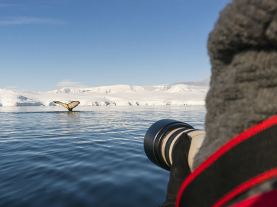 Janssonius whale watching antarctica cruise